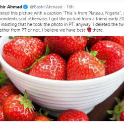 """President Assistant Bashir Ahmad responds after being called out for """"wrongly passing off"""" picture of strawberries like those from the Plateau province."""