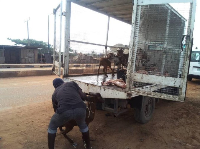 Lagos State Govt dislodges ten illegal slaughter slabs, donates 34 confiscated animals, meat carcass to orphanages and correctional homes