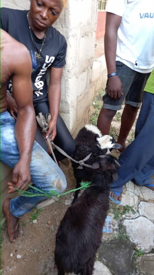 Two lovers nabbed for allegedly stealing sheep in Anambra community (photos/video)
