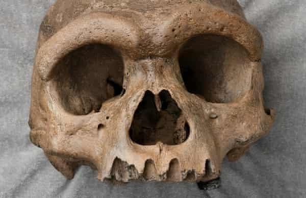 Scientists unveil Homo longi aka 'dragon man,' the latest addition to the human evolution tree (Photos)