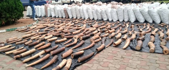 Three suspected foreign smugglers arrested as Nigeria Customs intercepts pangolin scales, elephant tusks worth N22.3bn in Lagos