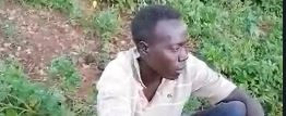 Man caught having sex with cow at night