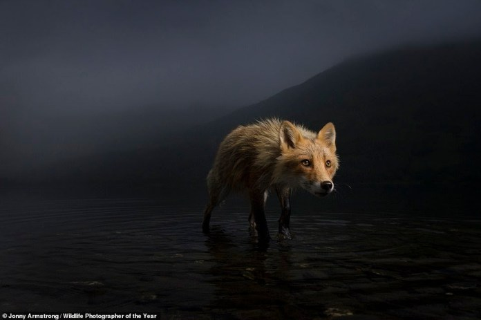 See stunning images submitted for the Wildlife Photographer of the Year 2021 competition