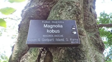 magnolia kobus trees nature hiking trail