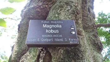 magnolia kobus trees nature hiking trail