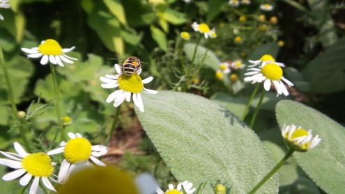 bees flowers hiking trail new york