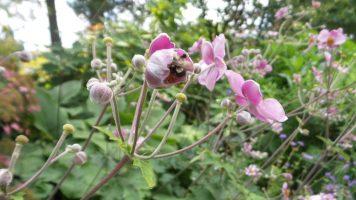 Bees in Flower - New York Botanical Garden