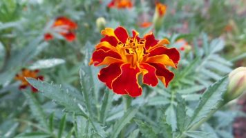red flower travel new york botanical garden