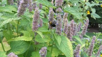 bees flowers new york botanical garden travel