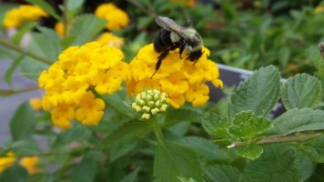 Bee on Flower - New York Botanical Gardens