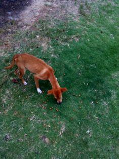 stray dog falmouth travel jamaica