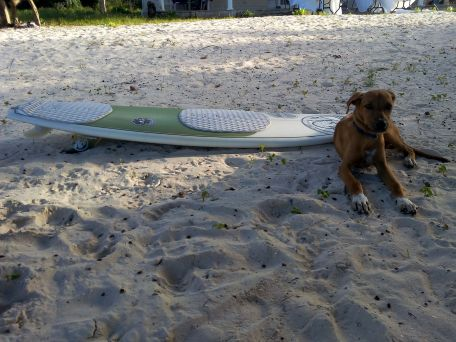 dog surfboard adventure travel jamaica beach adopt don't shop