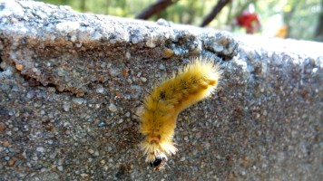 yellow bug poisonous hiking trail travel