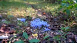 hiking trail flower travel adventure