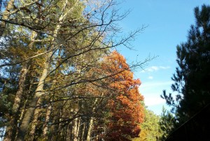 seasons fall