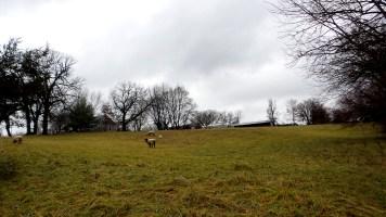 travel sheep rainy autumn