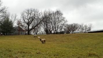 farm agriculture countryside grassland nature
