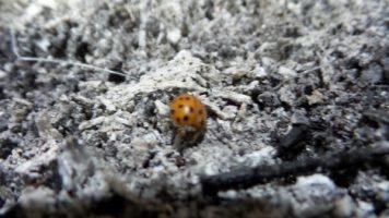 Ladybug at Sunderbruch Park in Iowa