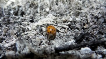 Ladybug at Sunderbruch Park in Iowa