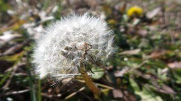 Flower -Spring