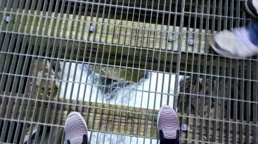 shoes alexis chateau