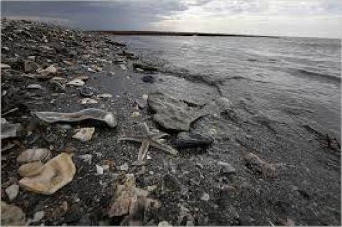 Oil Spill Lou Gold