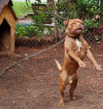 dog fighting animal abuse cruelty neglect
