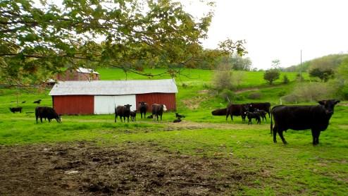 parrott farm green grass nature