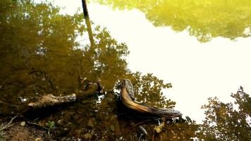 water log nature hiking