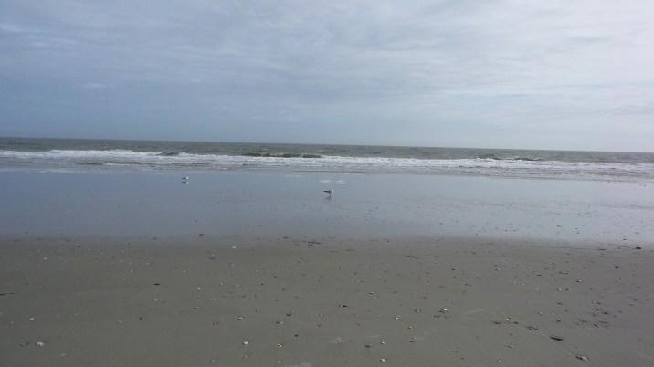 seagulls-on-myrtle-beach