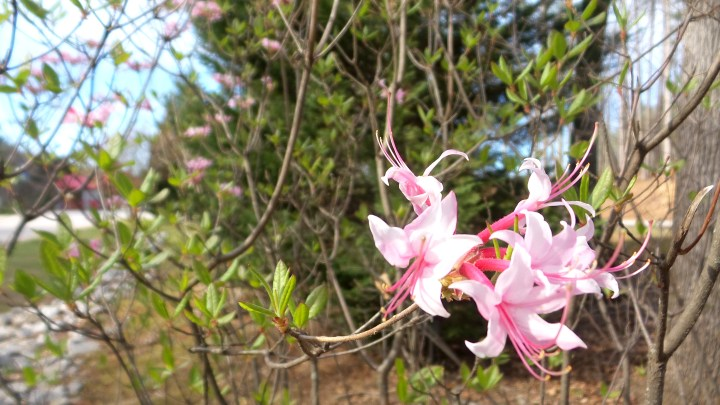 24 - Spring Flowers on the Trail.jpg