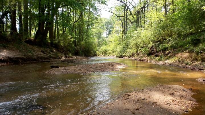 1 Mason Mill Hiking Trail Georgia