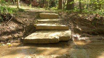 10 Steps on Deepdene Park Trail