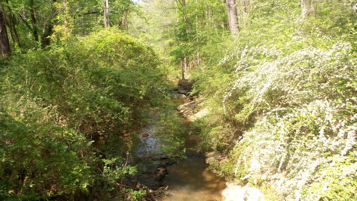 14 Mason Mill Stream Nature