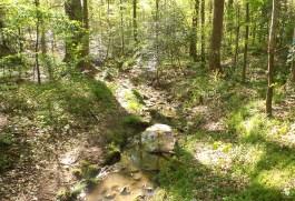 42 Deepdene Park Stream