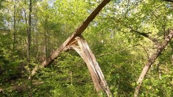 54 Deepdene Park Broken Tree