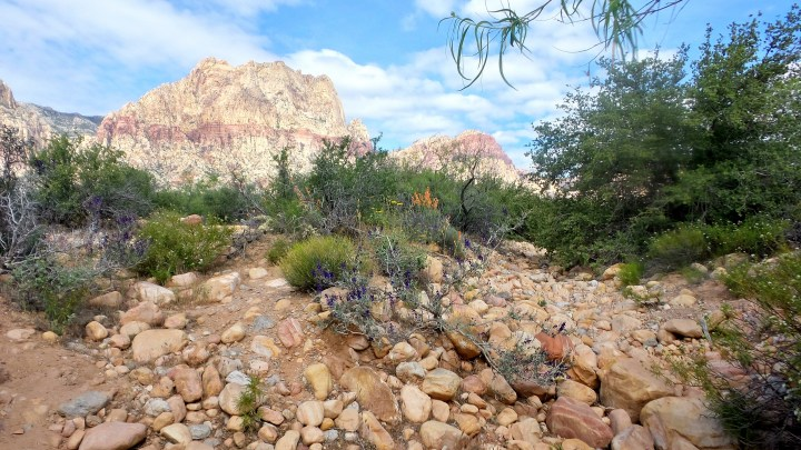 Red Rock Canyon Desert Vegas.jpg