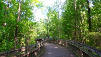 13 Jesters Creek Georgia Boardwalk