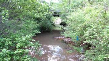 3 Jesters Creek Murky Water