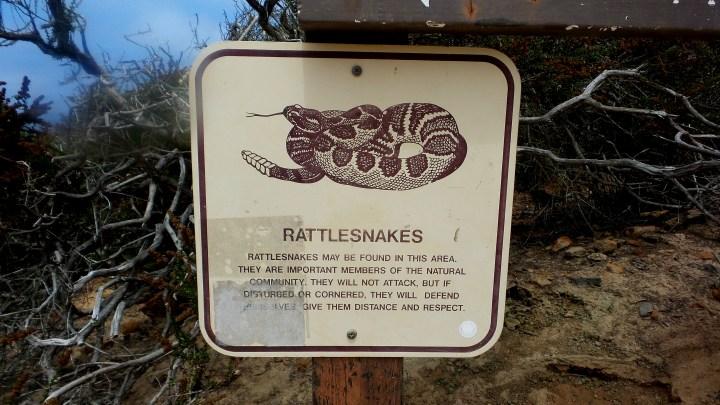16 Torrey Pines Rattlesnake Sign.jpg