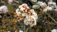 9 Torrey Pines Flowers
