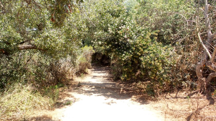 4 Annies Canyon Hiking Trail.jpg
