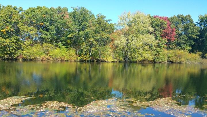 22 Mine Falls Park Leaf Turning.jpg