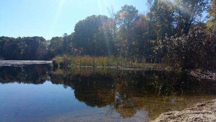 25 Mine Falls Park Swamp.jpg