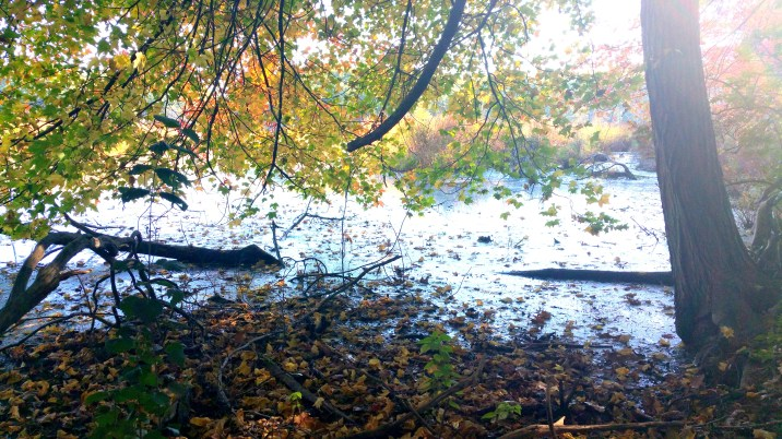 10 Autumn Leaves Bakers Meadow Reservation