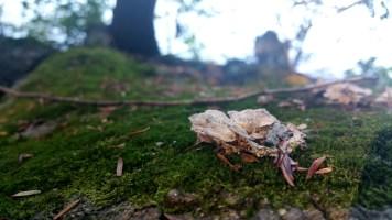 10 Deer Jump Reservation Fungi