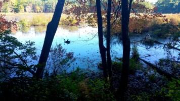 11 Sakowich Reservation Ducks Adventure