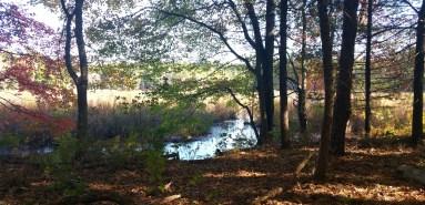 12 Sakowich Reservation Hiking Massachussetts