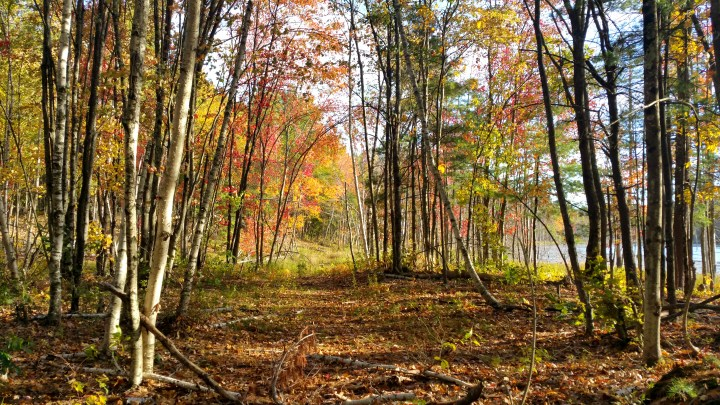 13 Horse Hill Nature Preserve in the Fall.jpg
