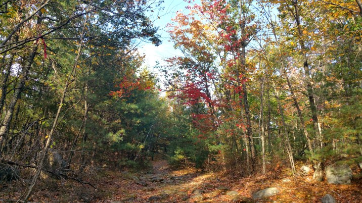 16 Horse Hill Nature Preserve in the Autumn
